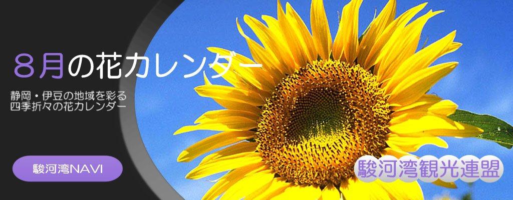 静岡の8月の花カレンダー