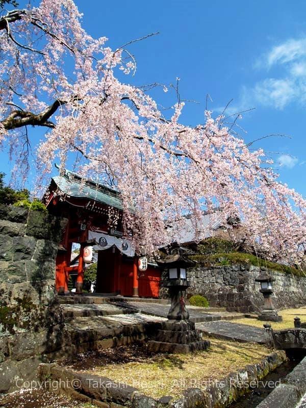 大石寺 --- 富士宮市観光ガイド『駿河湾☆百景』